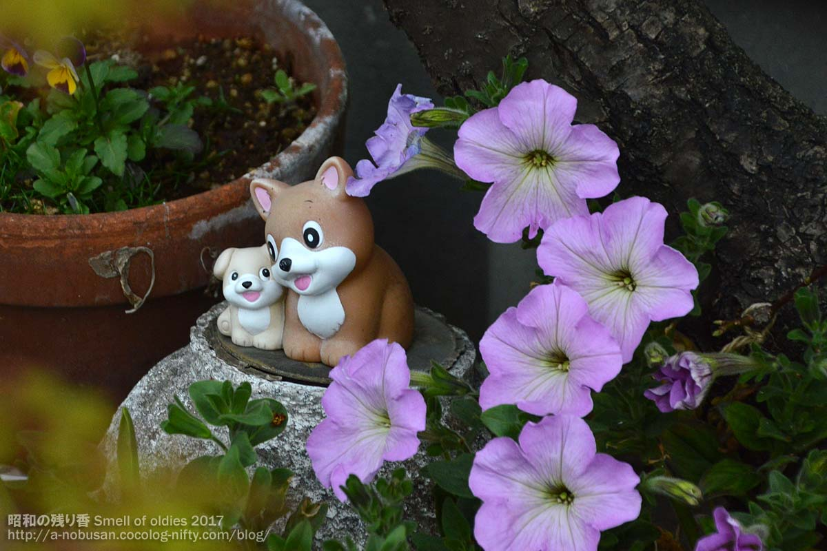 Dsc_0338_flower_and_dogs