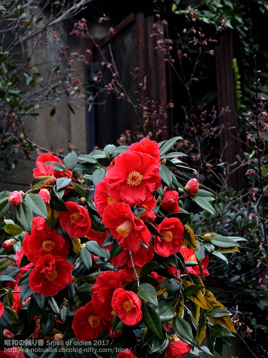 Dsc_0418_red_flower