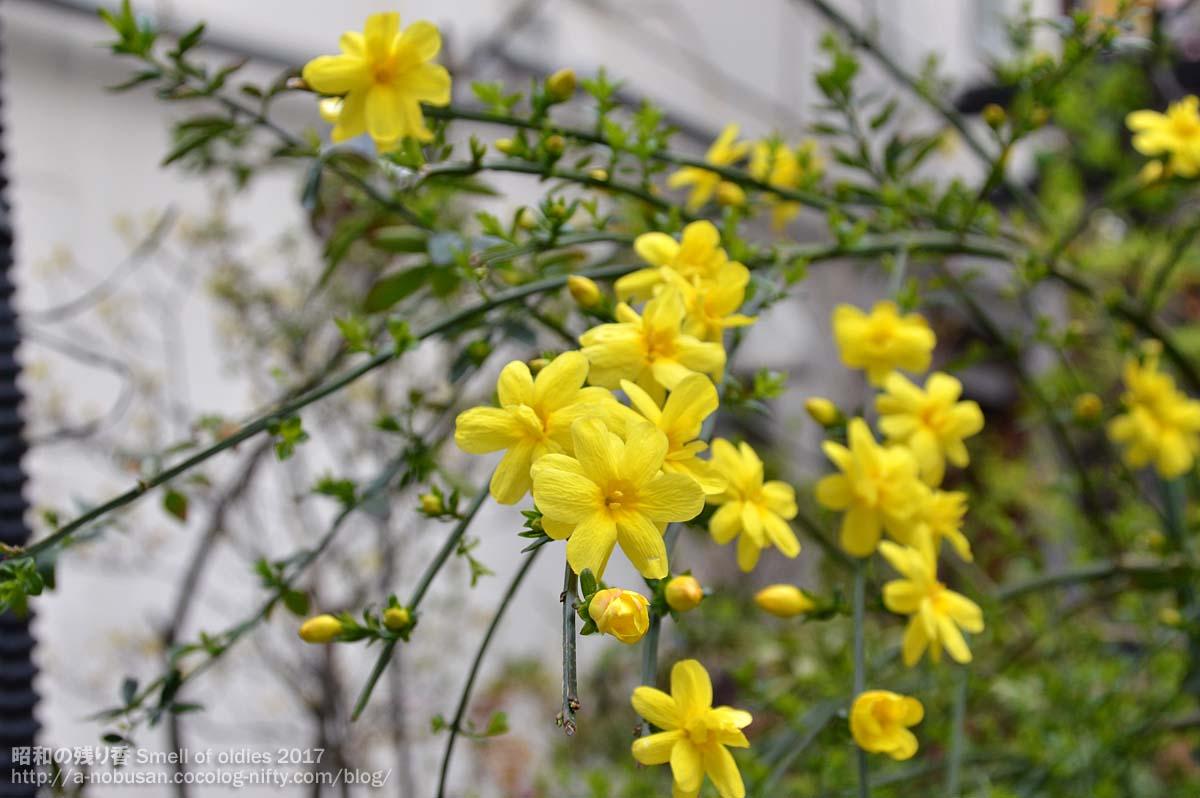 Dsc_0439_shidare_flower