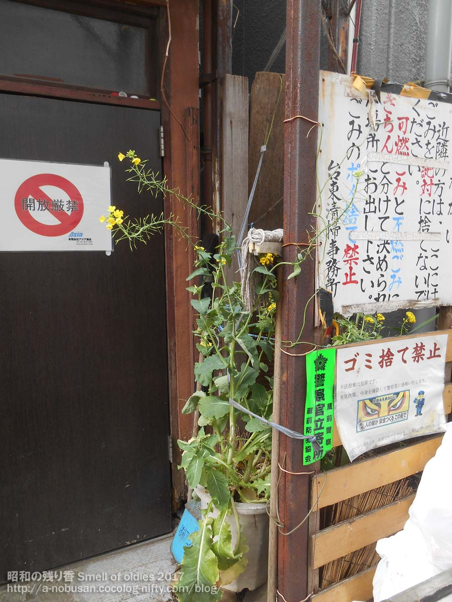 20170410_dscn0029_nanohana_nishiasa