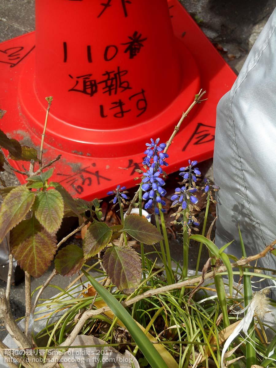 20170410_dscn0066_blue_flower