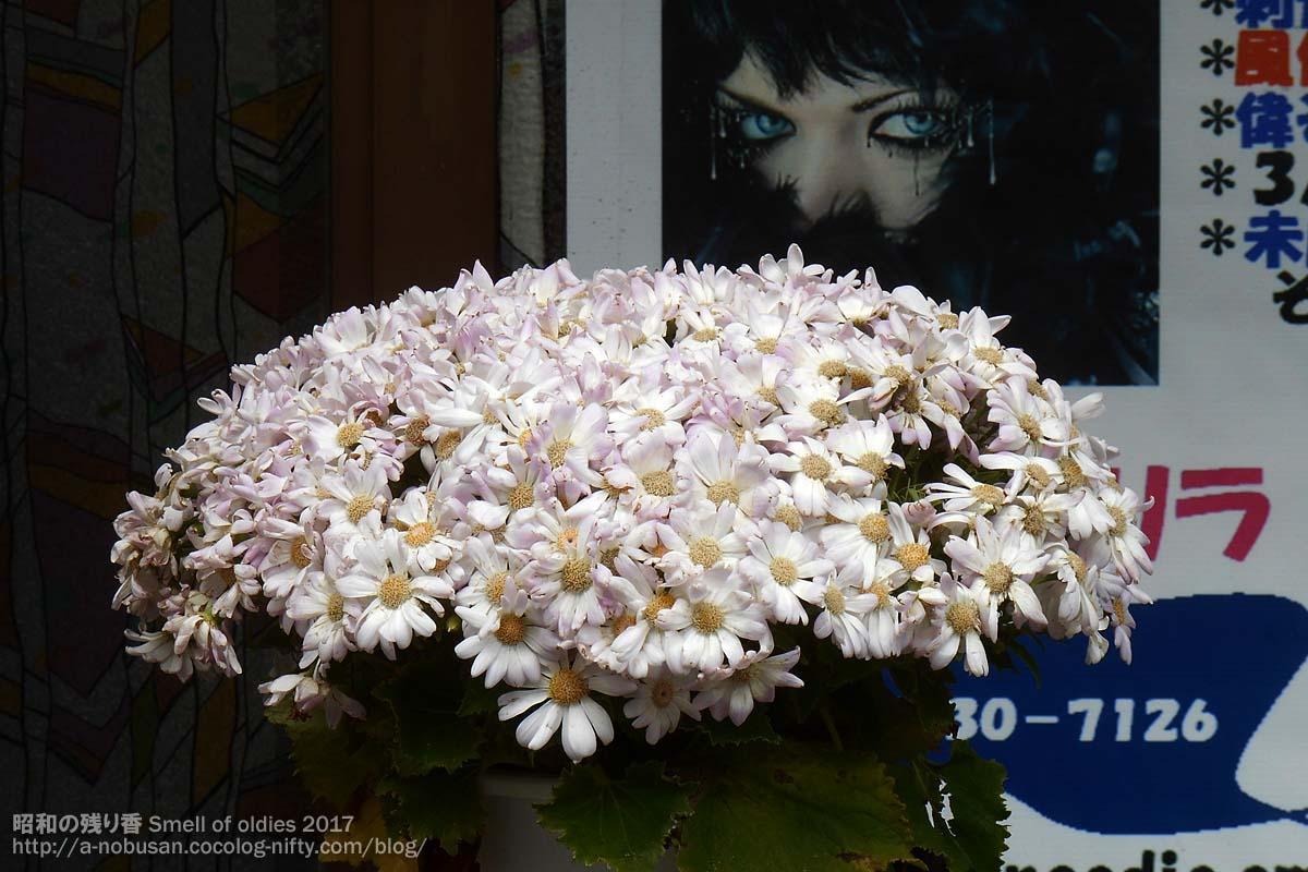 20170410_dscn0078_white_flower