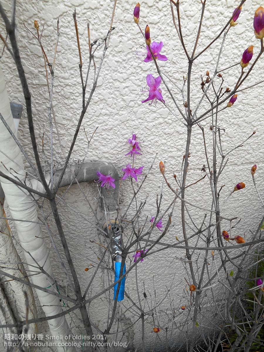 20170412_dscn0203_purple_flower