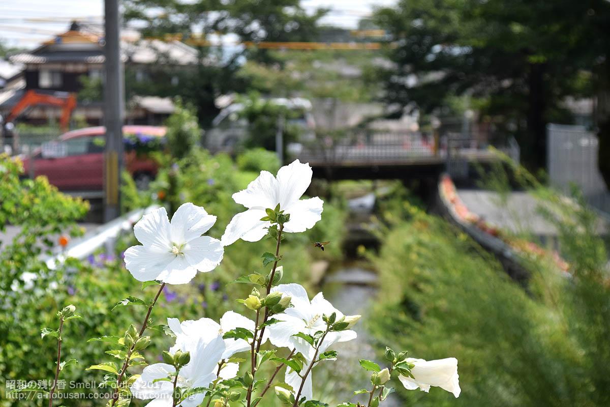 Dsc_0826_hachi_ga_tobu