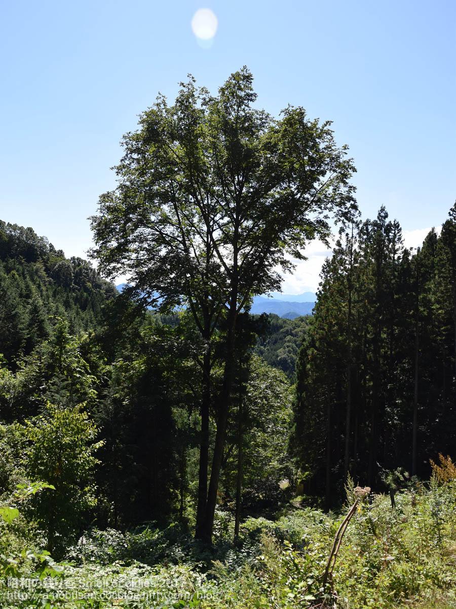 Dsc_0764_tree