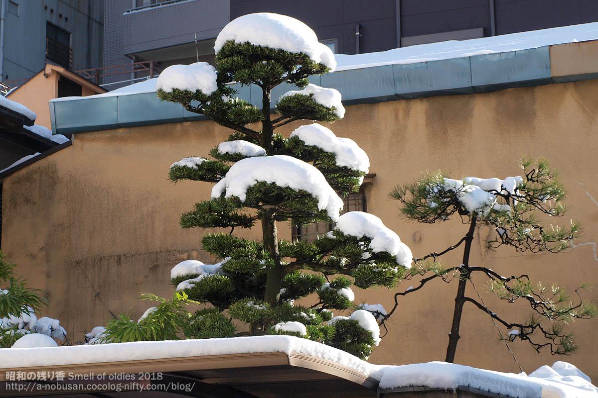 P1230250_matsu_nishiasakusa_snow