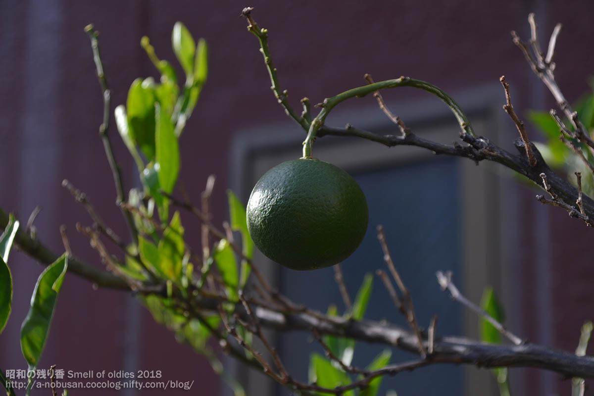 Dsc_0386_green_orange_maebashi